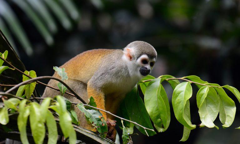 Squert-monkey-slider